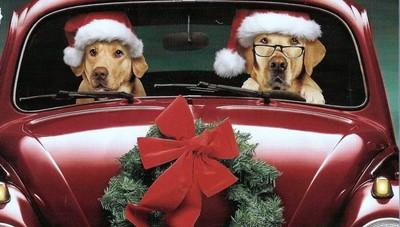 ChristmasLab.jpg